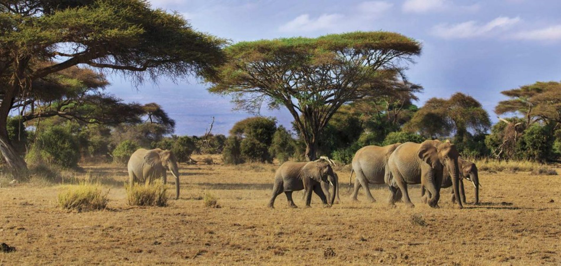 East Africa Tour Package